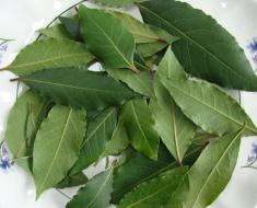 Bay leaves for drying
