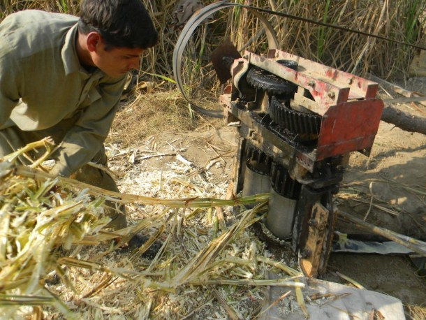 Jaggery extraction form Sugar Cane