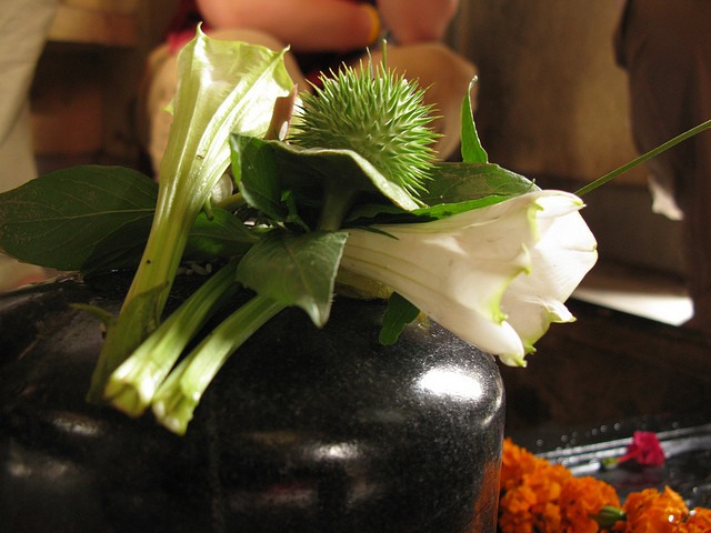 Shivling worship with Dhatura flowers and fruits