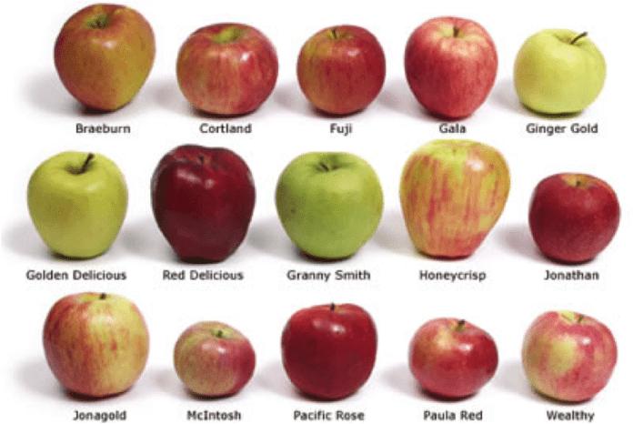 Apples-of-different-varieties