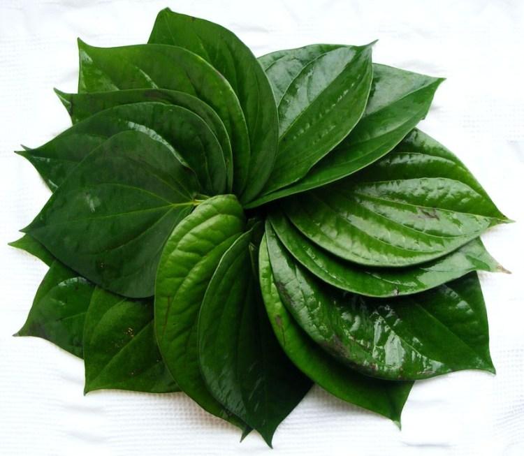 Leaves-of-Betel-plant