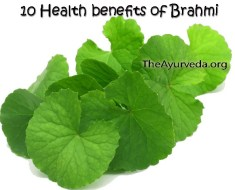 10 health benefits of brahmi