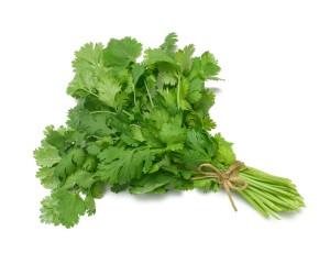 Bunch-of-cilantro
