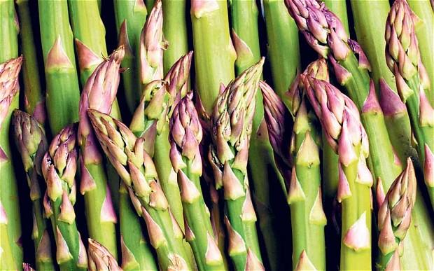 Edible-Asparagus-plant