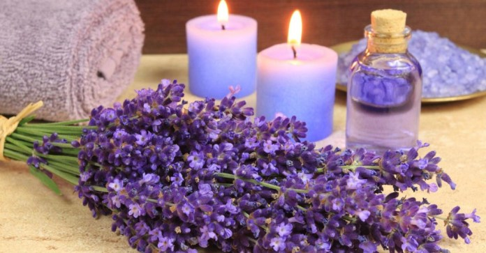 Flowers and oil of Lavender