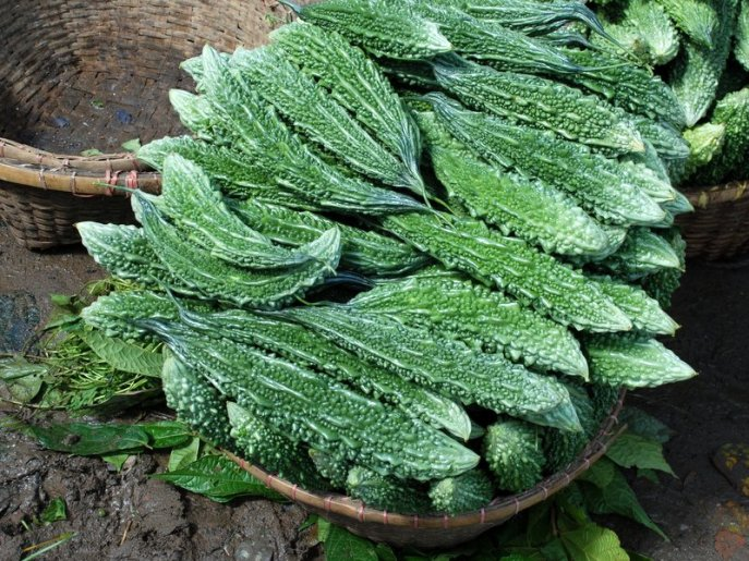 Indian Bitter Gourd for health
