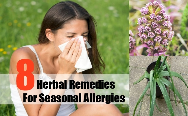Herbal-Remedies-For-Seasonal-Allergies