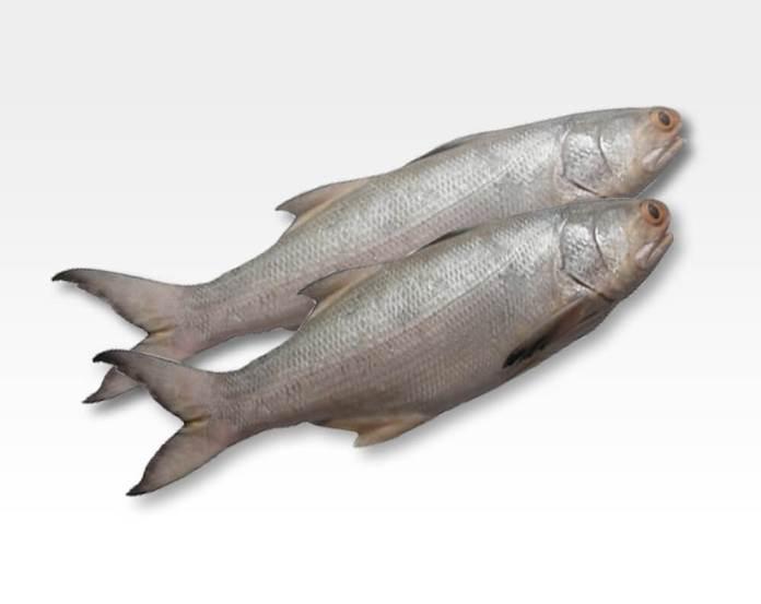 Indian Salmon fish benefits