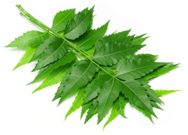 Neem leaves for skin