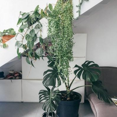 gardening-19