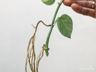 gardening-28