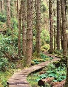 path thro trees