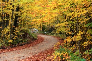 winding road color trees