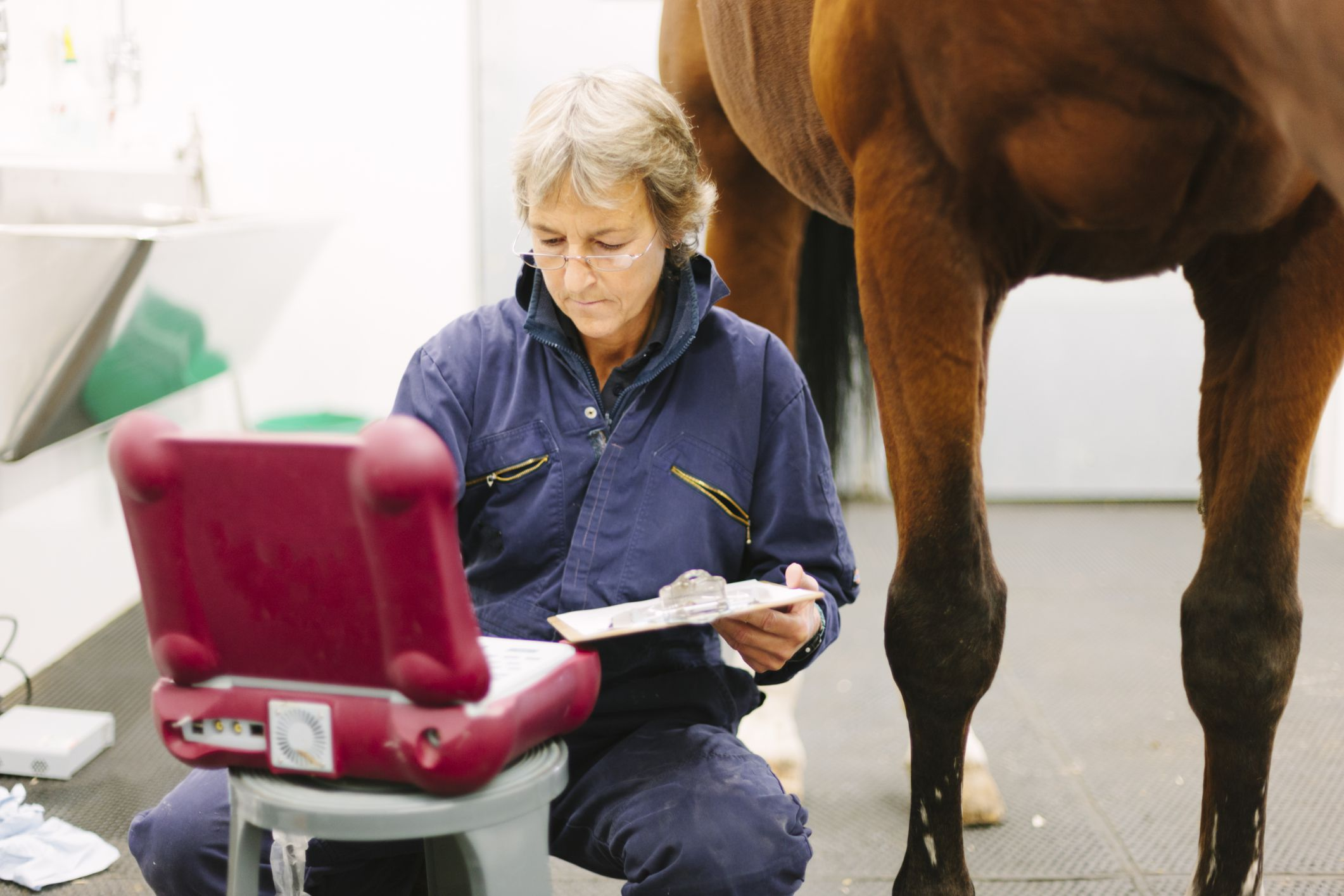 Equine Veterinary Technician Job Description Salary