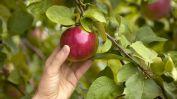 Afbeeldingsresultaat voor low hanging fruit