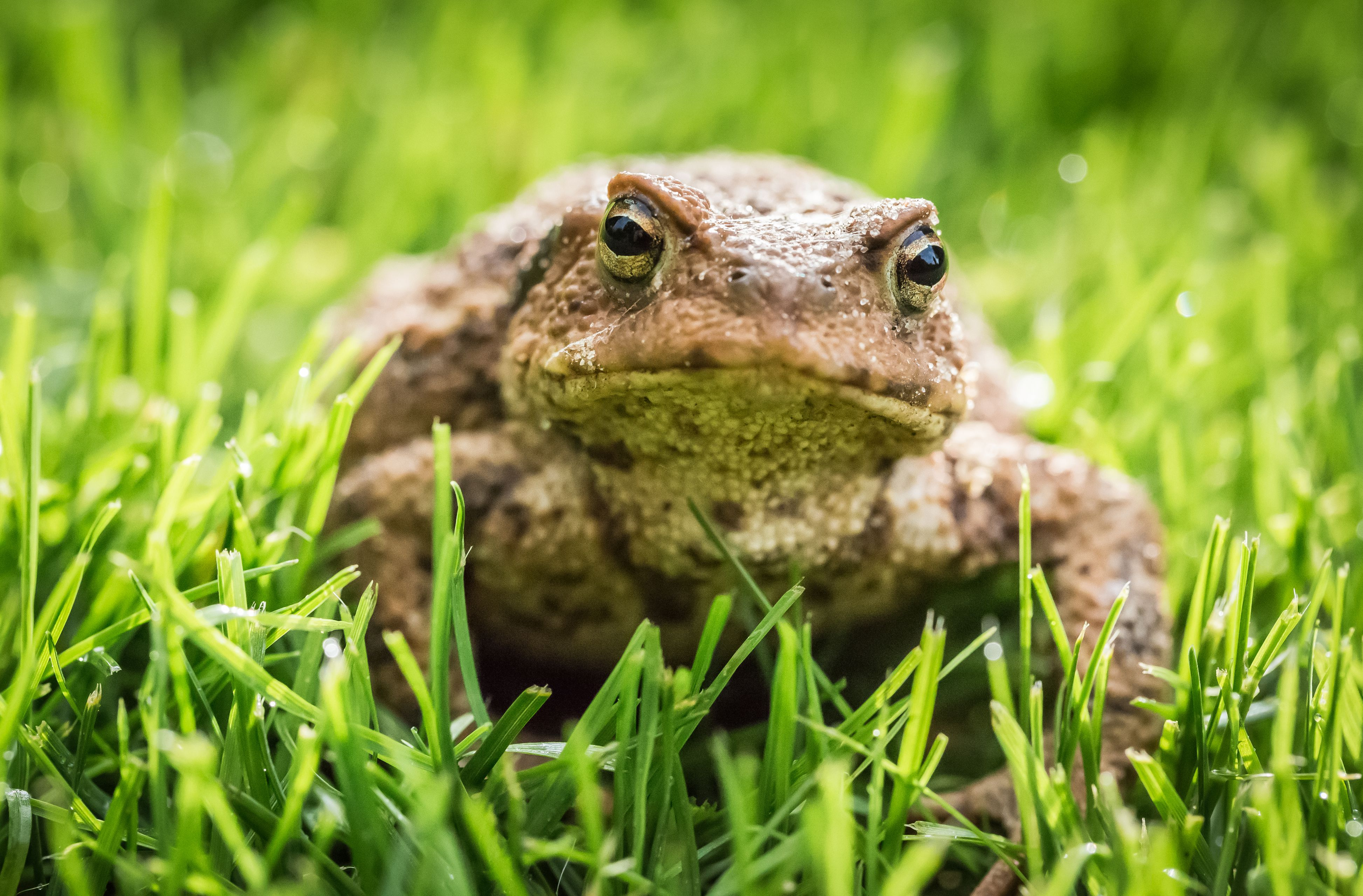 How To Make A Toad House To Make Your Yard Bug Free