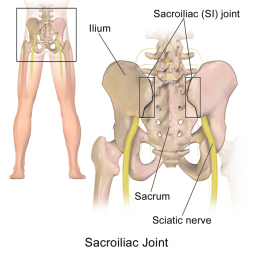 4 great exercises for the pelvis and SI-joint 4 great exercises for pelvic and si-joint 4 great exercises for pelvic and SI-Joint Sacroiliac Joint e1479992521642