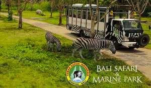 bali safari and marine park | The Bali Package