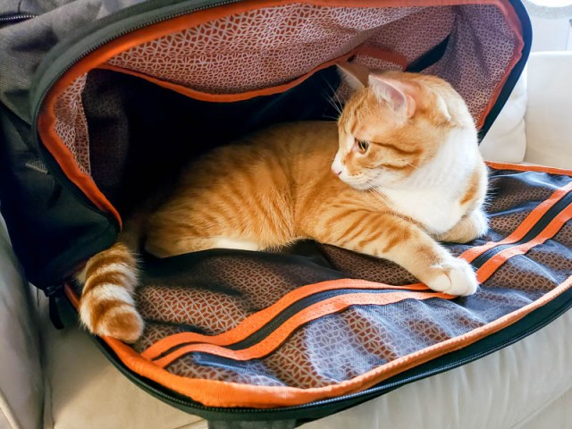 Knack backpack expandable compartment with cat inside