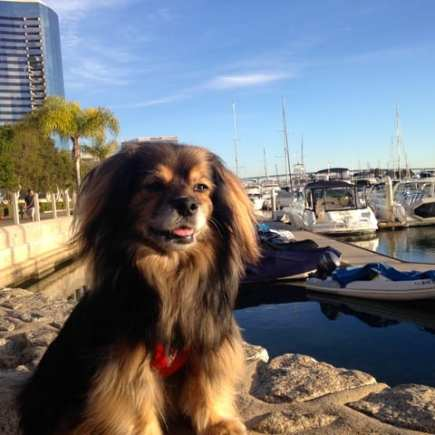 beautiful small dog sitting at marina in San Diego