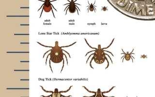 tick size image