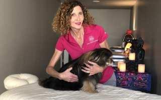 canine massage image