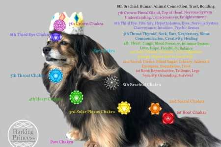 image of dog with canine chakras