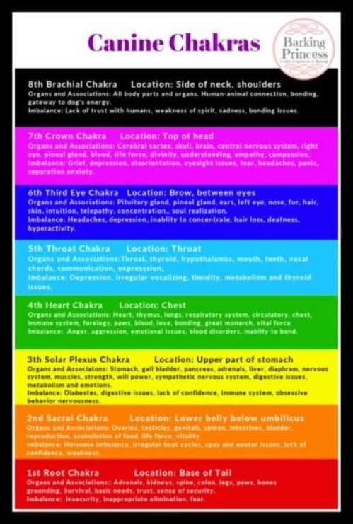 canine chakra color chart