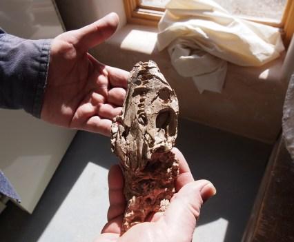 Holding Dinosaur Bones at Ghost Ranch, NM.