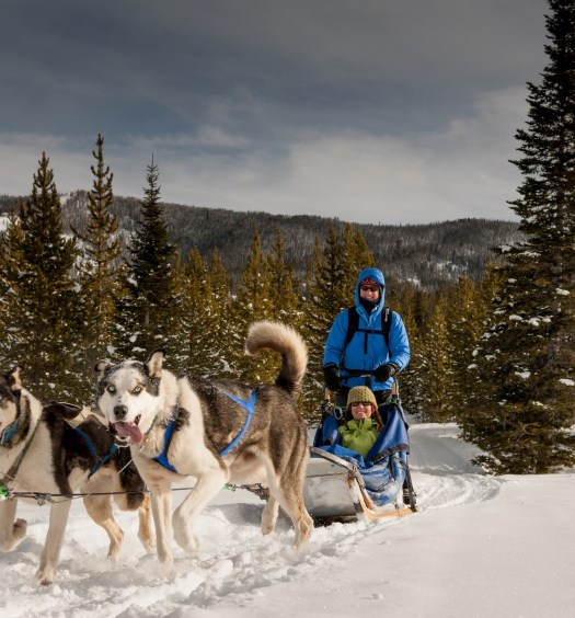 Spirit of the North Sled Dog Adventures, Big Sky