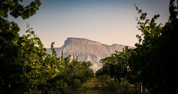 Mt. Garfield overlooking Grand Valley vineyards. ph: CWIDB
