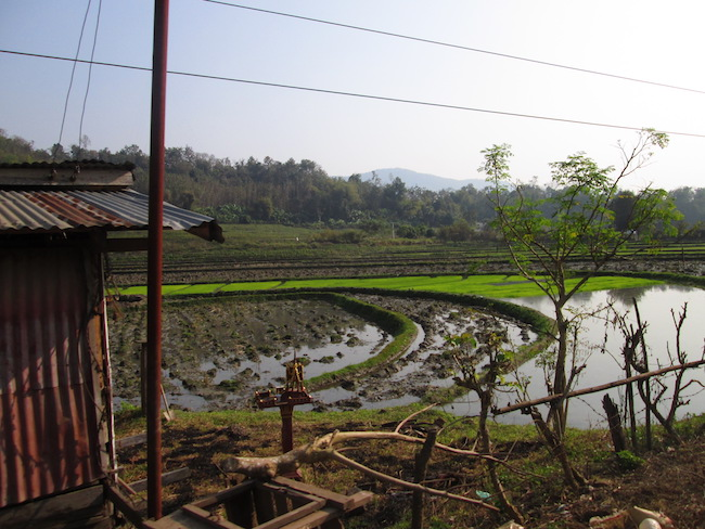 We passed a series of rice fields on our ride to the Kuang Si waterfalls