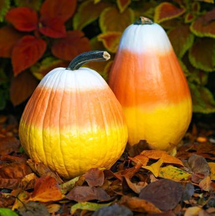pumpkin-decorating-101657958