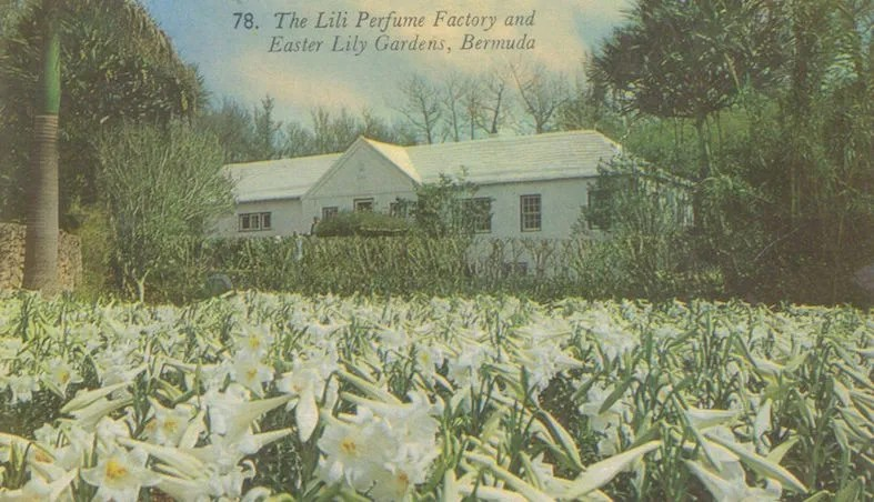 The Lily Perfume Factory