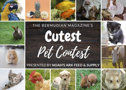The Winner of the Cutest Pet Contest Is…