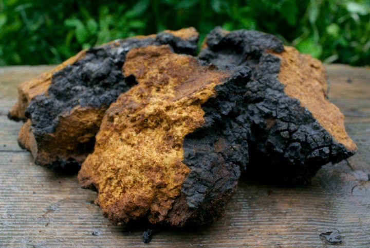 What's So Special About Chaga Mushrooms?