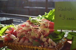 Red Earth Organic Farm radishes