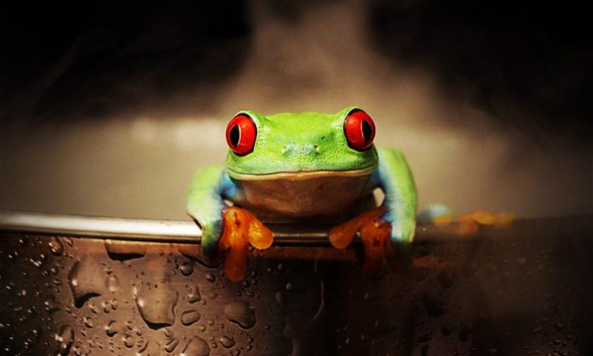 The Best Advice So Far - un-dumb frog