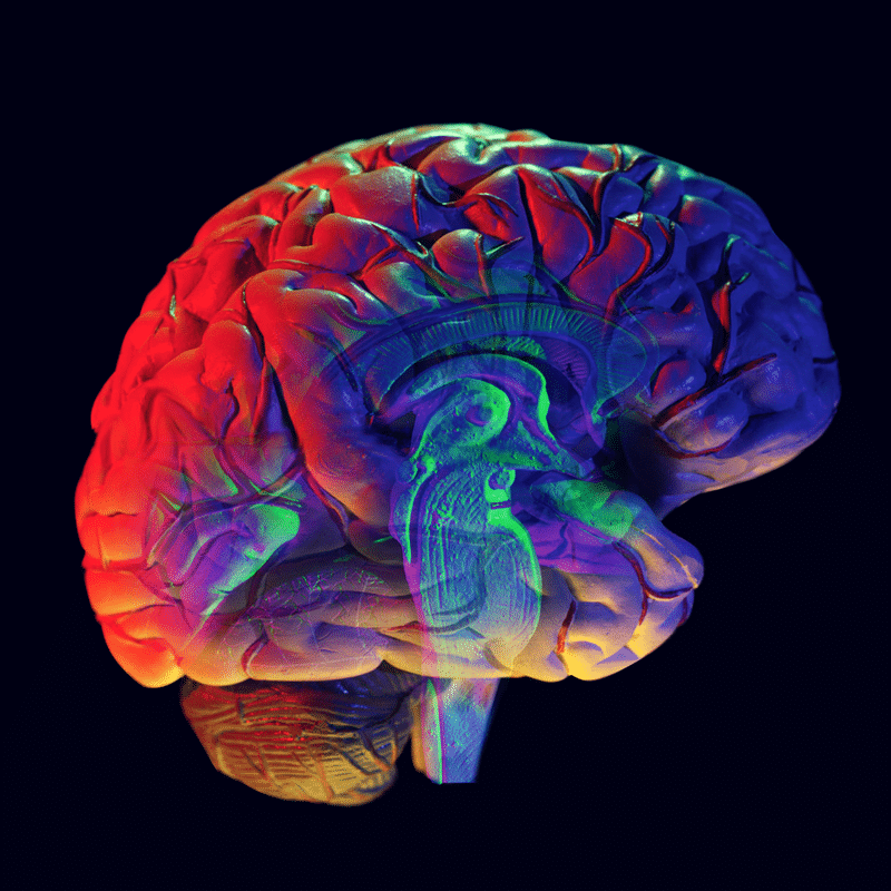 Quick Tips For A Better Brain