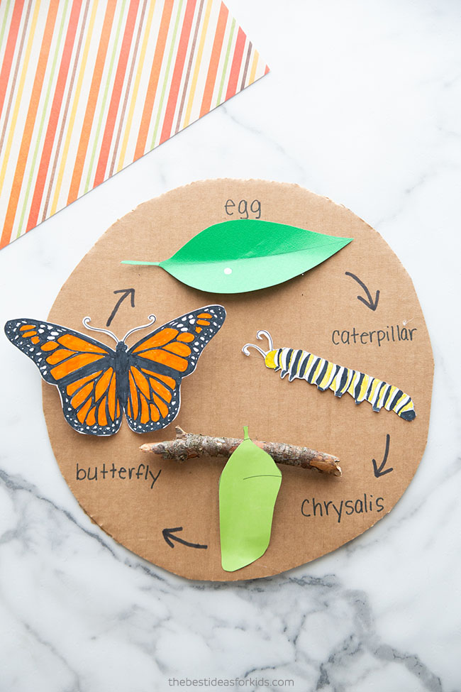 Butterfly Life Cycle Craft for Kids
