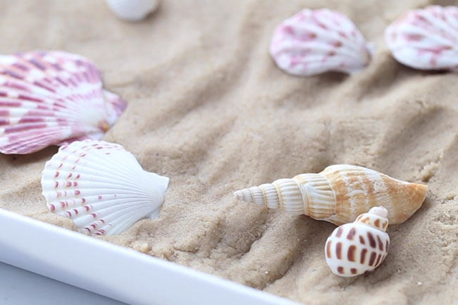 Add Seashells to Play Tray