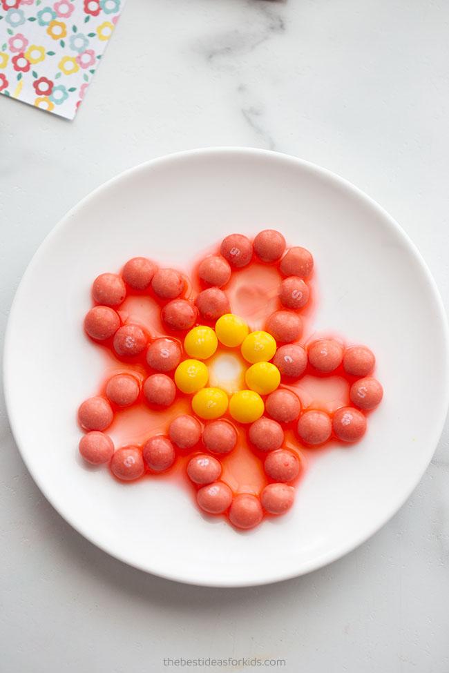 Flower Skittles Experiment for Kids