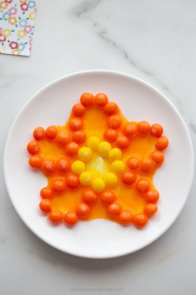 Skittles Flower Experiment