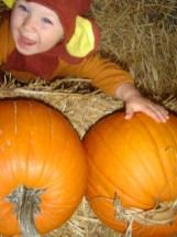 Pumpkin Patch, Encinitas CA 3