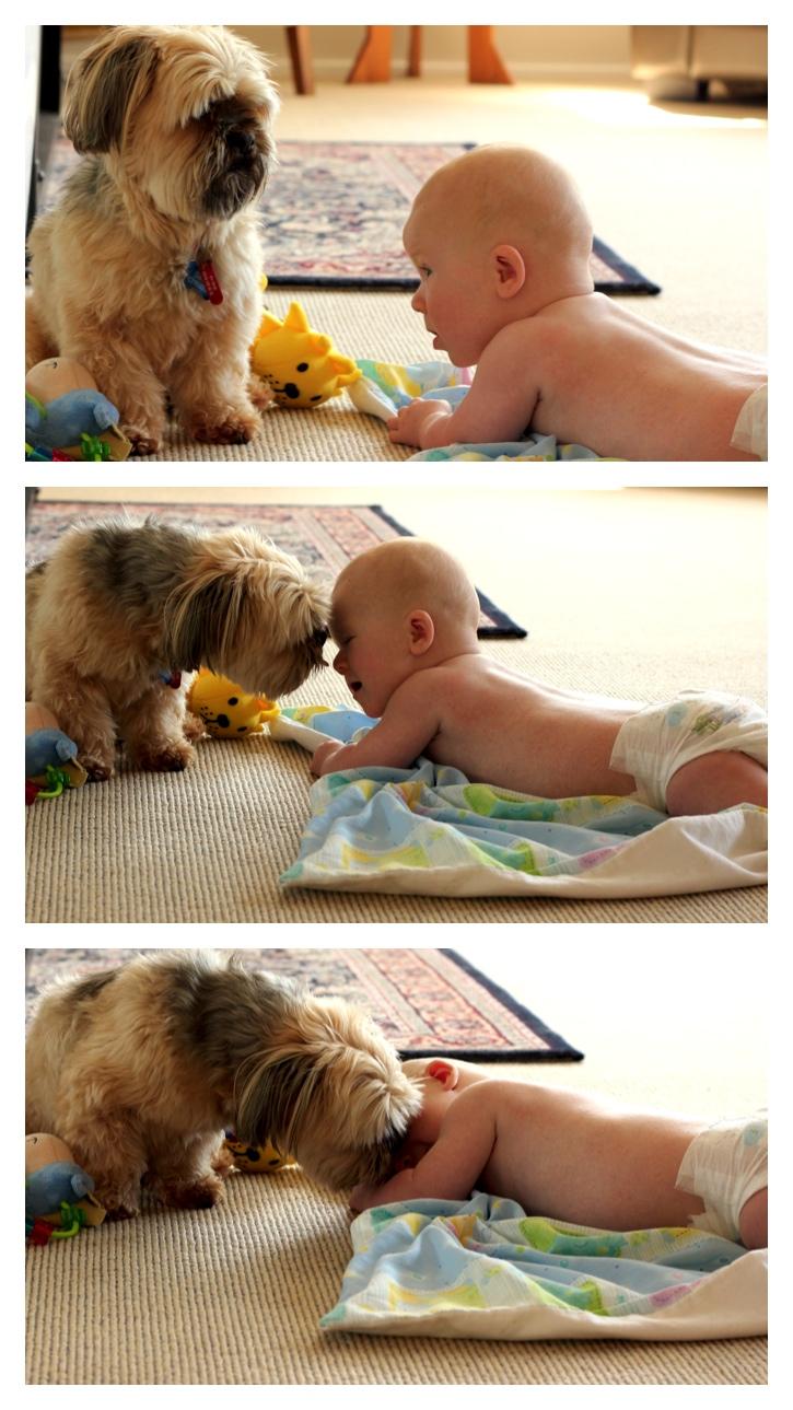 Dog kisses baby