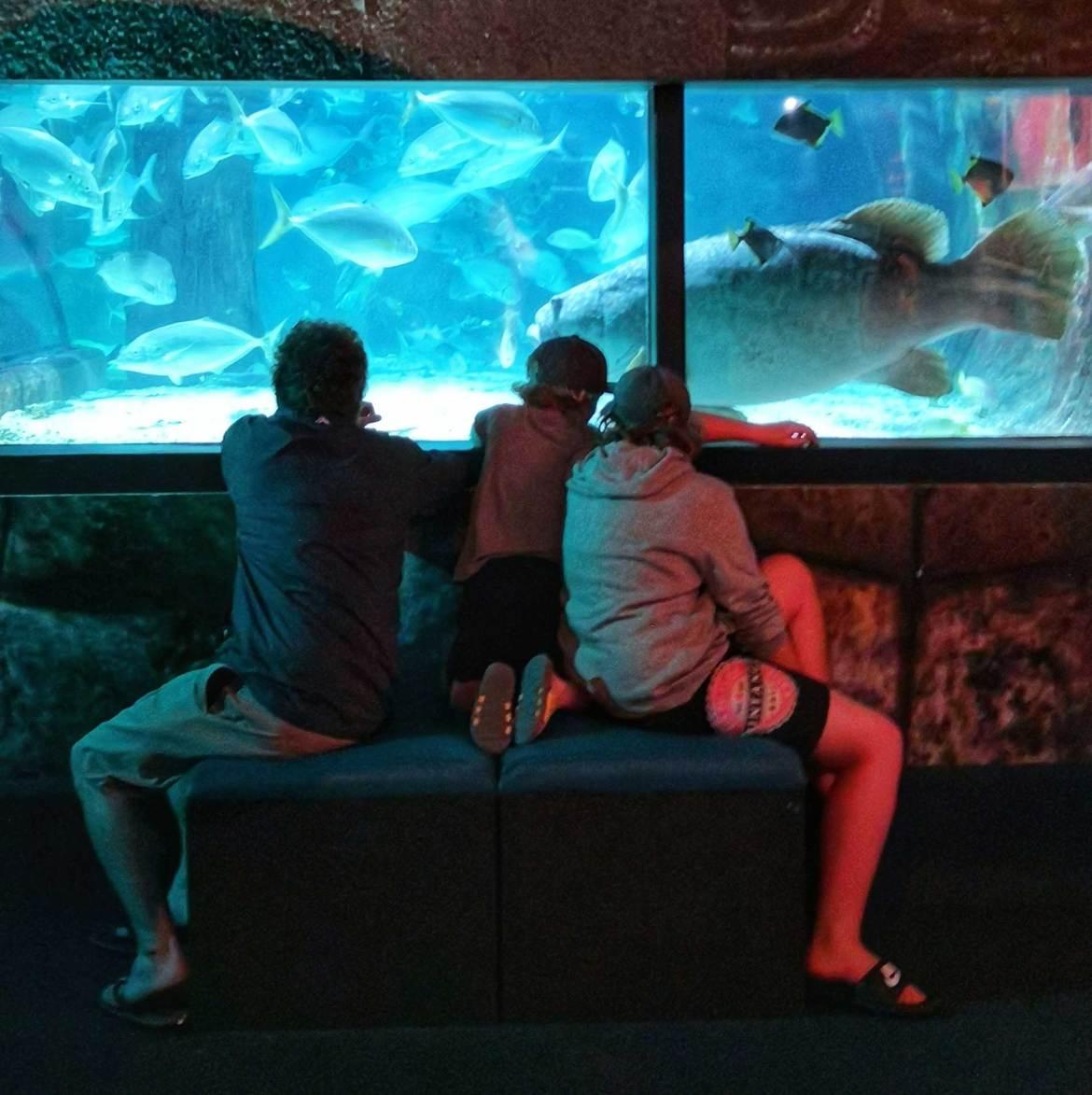New Zealand's Top Travel Lifestyle Blog Home Decor Sunshine Coast Aquarium
