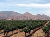 guadalupe valley vineyard.jpg