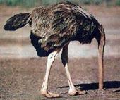 ostrich-largeWEB.jpg