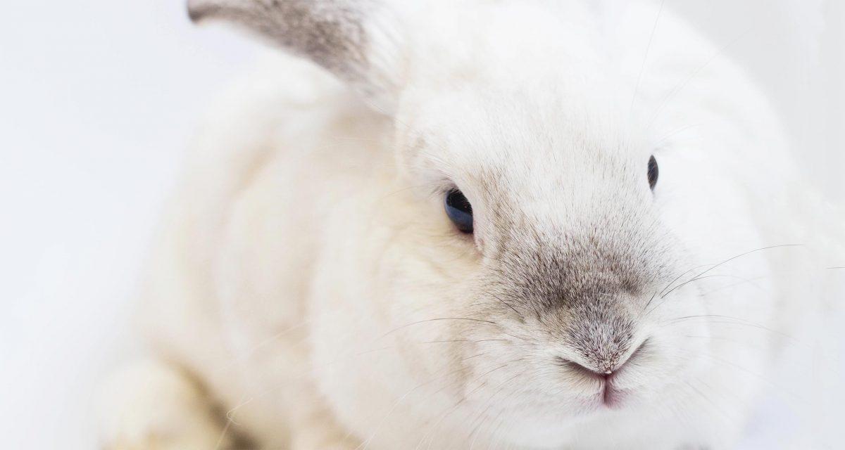 De feiten over dierproefvrij, vegetarisch en vegan make up & cosmetica