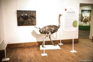 agence-communication-limoges-tbo-affiche-musee-gueret-autruche